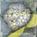 Antique bloom