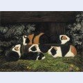 Sechs meerschweinchen im stall