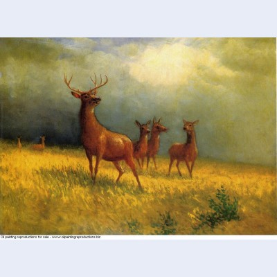 Deer in a field 1885