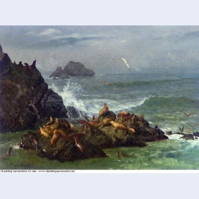 Seal rocks pacific ocean california