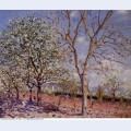 Plum and walnut trees in spring 1889