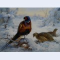 Cock and hen pheasant in winter