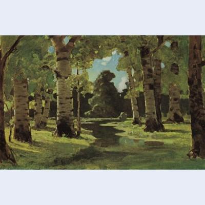 A birch grove 5