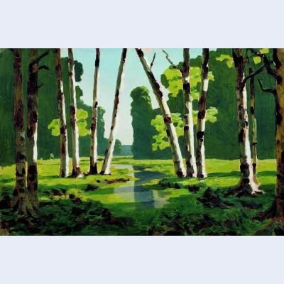 A birch grove 7