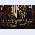 A birch grove 8