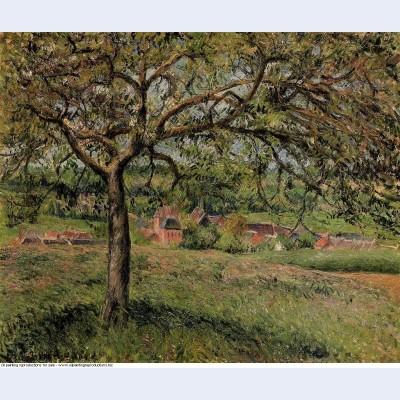 Apple tree at eragny 1884