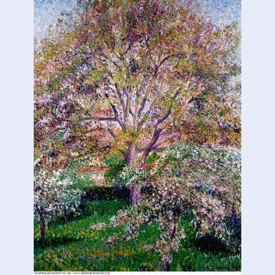 Wallnut and apple trees in bloom at eragny