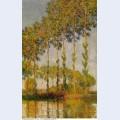 Poplars row in autumn