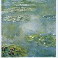 Water lilies 21