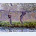 Willows in springtime
