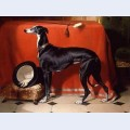 Eos a favorite greyhound of prince albert