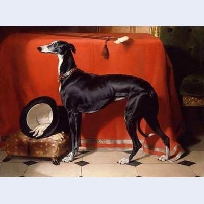Eos a favorite greyhound of prince albert