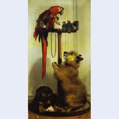 Macaw love birds terrier and spaniel puppies belonging to her majesty