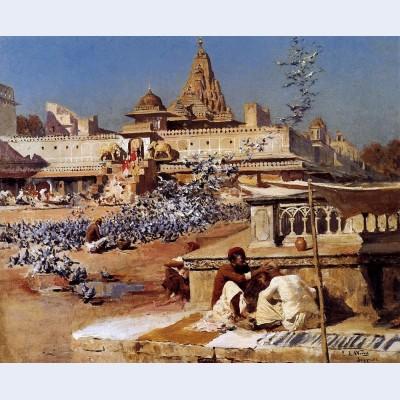 Feeding the sacred pigeons jaipur