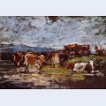 Cows in a pasture 3