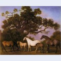 Mares and foals under an oak tree