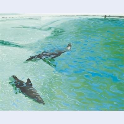 Otaries dans l eau