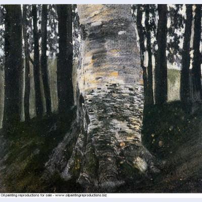Birch in a forest