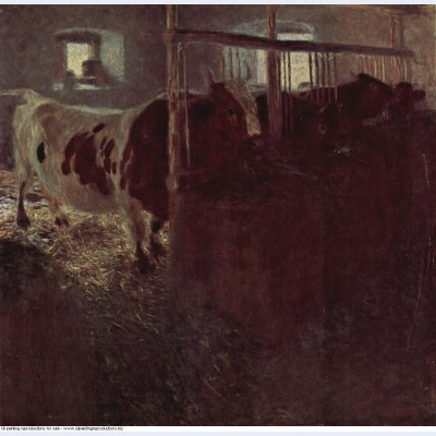 Cows in the barn 1901