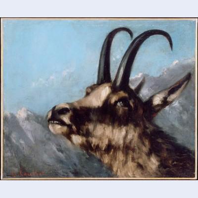Head of gazelle