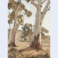 Study gum trees woodside