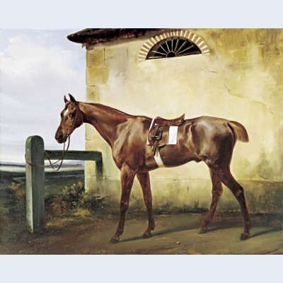 A saddled race horse tied to a fence