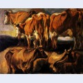 Five studies of cows