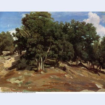 Fontainebleau black oaks of bas breau