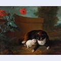 Chatte et chaton et chien et perroquet