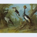 Demoiselle crane toucan and tufted crane