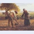 The potato growers