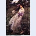 Windflowers 1902