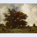 Fontainebleau oaks