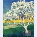 Apple tree in blossom