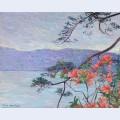 Suruga bay azaleas