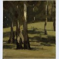 Shadows landscape with trees