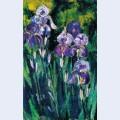 Irises in evening shadows