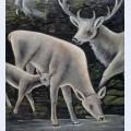 Deer family at waterhole