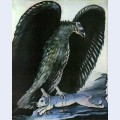 Eagle with hare
