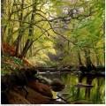 Landscape painting 06