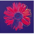 Daisy c 1982 blue and red
