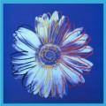 Daisy c 1982 blue on blue