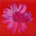 Daisy c 1982 crimson and pink
