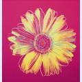 Daisy c 1982 fuschia and yellow