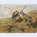 Zwei antilopen