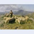 Shepherd of the pyrenees