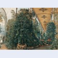Interior view of the palm house of lednice castle