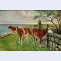 Cattle near a gate saltholm
