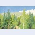 Forest skog
