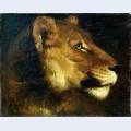 Head of lioness